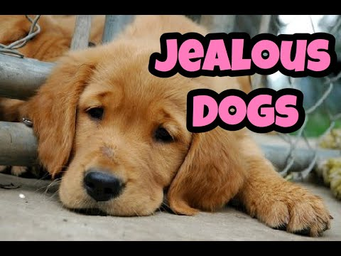 Jealous Dogs Want Attention Compilation (2019)