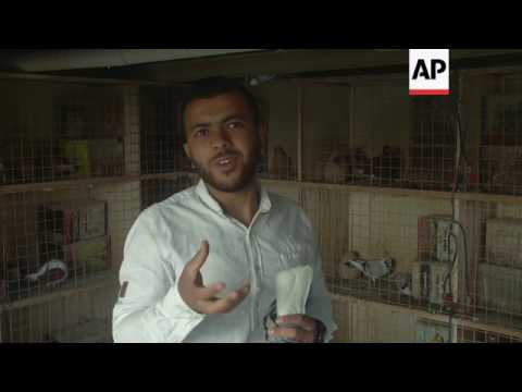 Pigeon breeding is big business in Amman