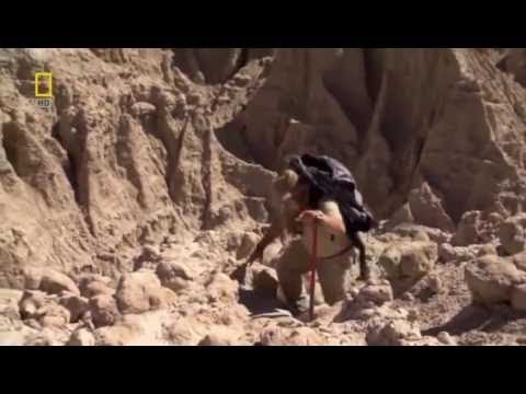 Prehistoric Dinosaur Pig   Documentary Films ◄► 1080i