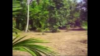 253P Coconut Cultivated Land with House for Sale in Kuliyapitiya.