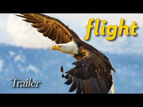 FLIGHT: The Genius of Birds - Trailer