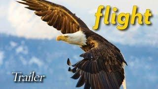 FLIGHT: The Genius of Birds - Trailer