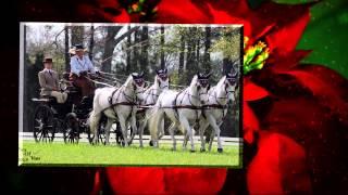 Popular Videos - United States Equestrian Federation & International Federation for Equestrian Sports