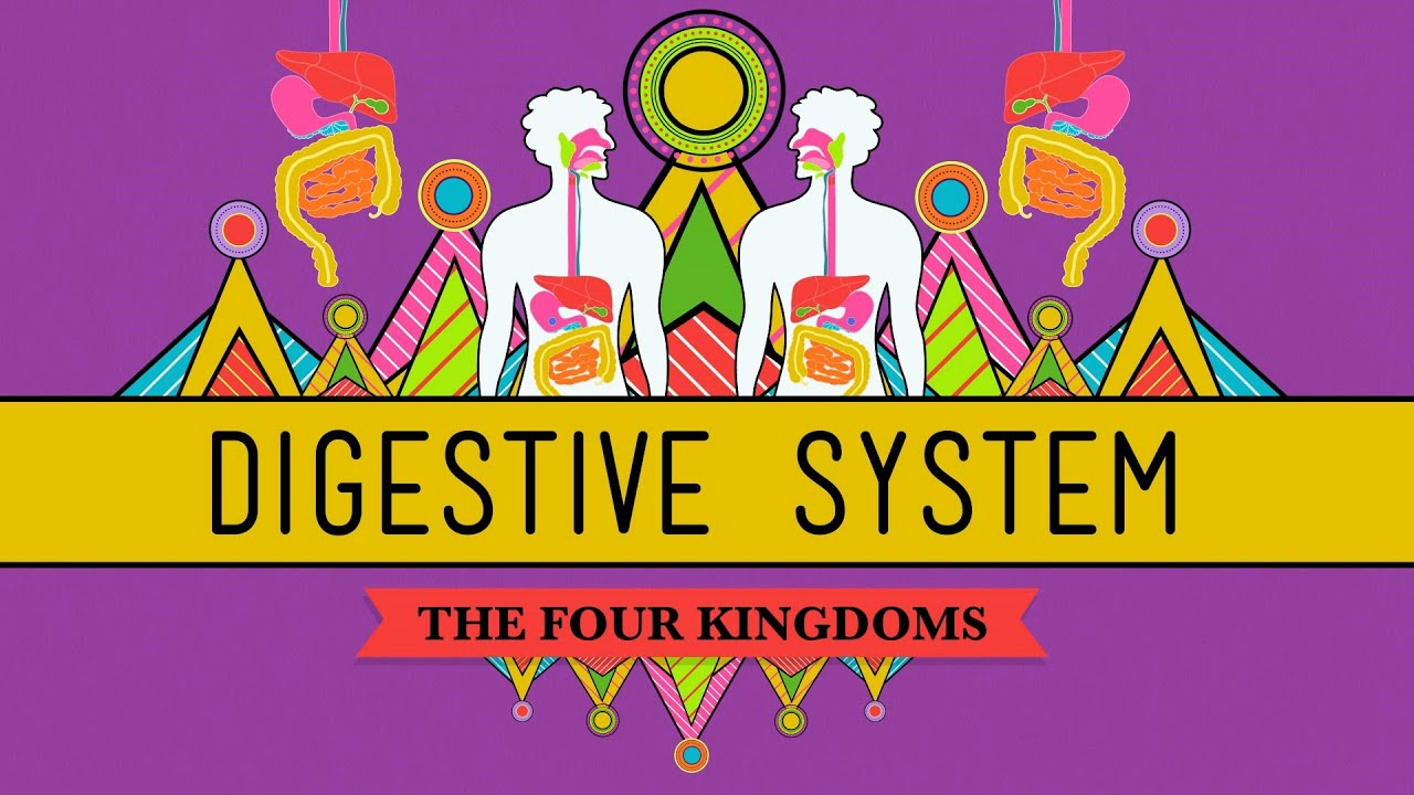The Digestive System Crashcourse Biology 28