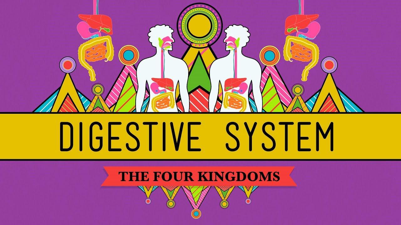 The Digestive System Crashcourse Biology 28