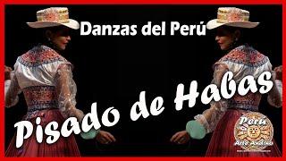 Danzas del Perú: Pisado de Habas - Danza de Arequipa