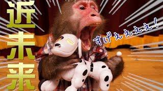 【未知の文明】お猿のカイくん「ロボット犬」に超ビックリ!!!!
