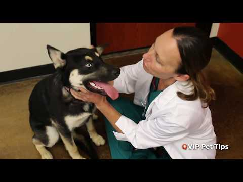 VIP Pet Tips  - Basic Preventive Care for Puppies & Kittens