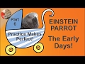 Einstein Parrot - Part 6, Practice Makes Perfect!