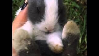 15s of my dutch Bunny! #CUTENESSOVERLOAD