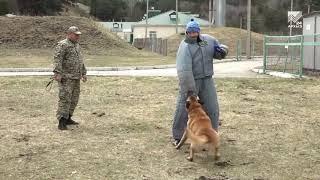 Собака бывает кусачей: погрануправление провело конкурс среди четвероногих защитников границы