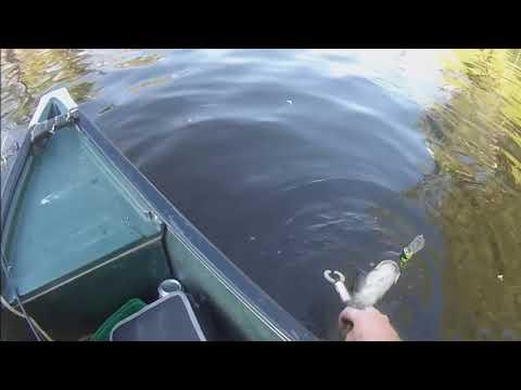 Murray Cod Fishing In The Dumaresq River