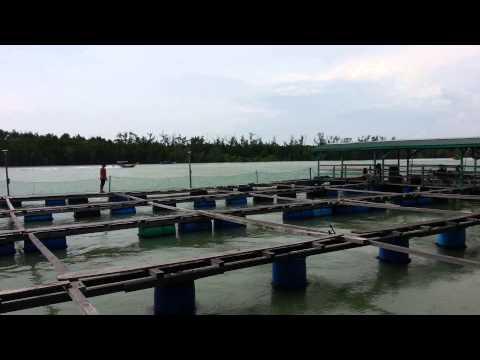 Ollo freefly - kelong pulau ketam
