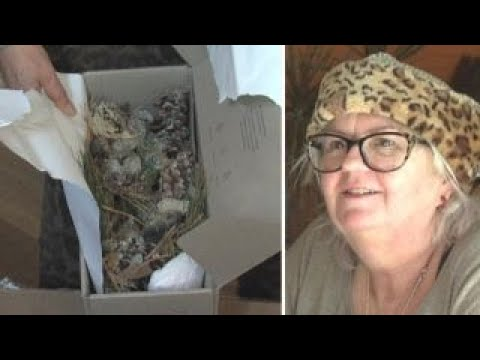 Resident leaves nasty surprise for 'porch pirates'