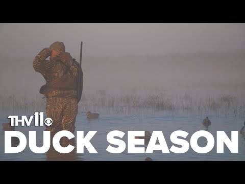 What Arkansas Hunters Can Expect This Duck Season