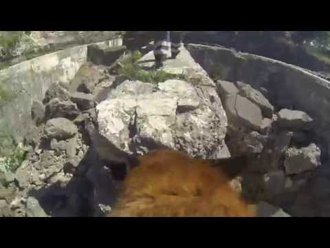 Rescue dog on rubble (Symba - Pest County Search and Rescue Service)