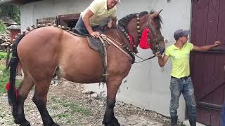 Caii lui Crețu de la Budesti,Maramureș-Pregătire pentru nunta#2019