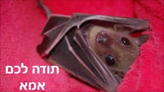 עמותת ע.ט.ל.ף אמא - the Israeli bat Sanctuary mom
