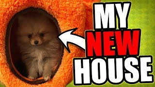 NEW APARTMENT TOUR 2017! + NEW PUPPY REVEAL!!