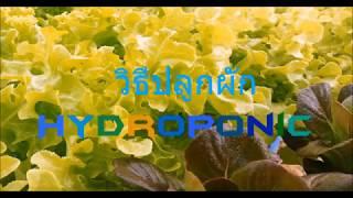 วิธีปลูกผัก Hydroponics EP.01 [เสรี Hydroponics]