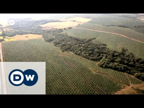 Soil Erosion Round the World - Causes and Solutions | Global 3000
