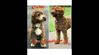 Baby dog Vs Adult dog part 3