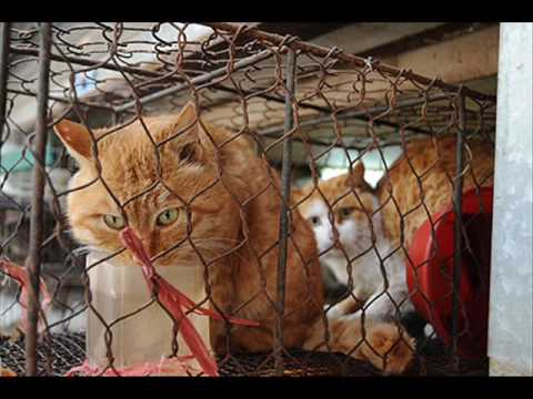 Endlose Qual Von Katzen Hunde Co In China Youtube