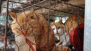 Endlose Qual von Katzen, Hunde & Co in China