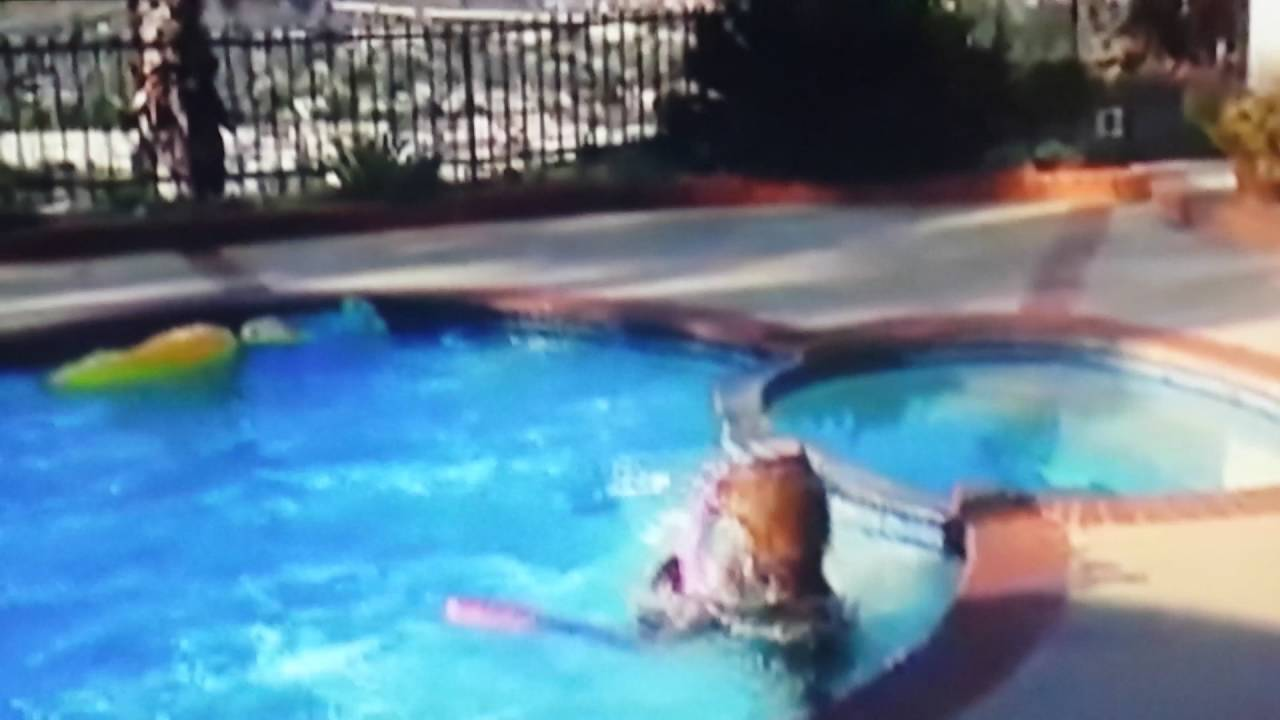 bear playing in pool with wet noodle and tube youtube