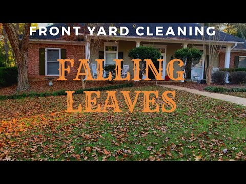 Cleaning the fallen leaves in the front yard