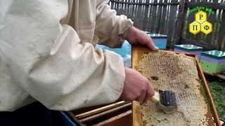 Пчеловодный пасечный ёж для распечатки сот