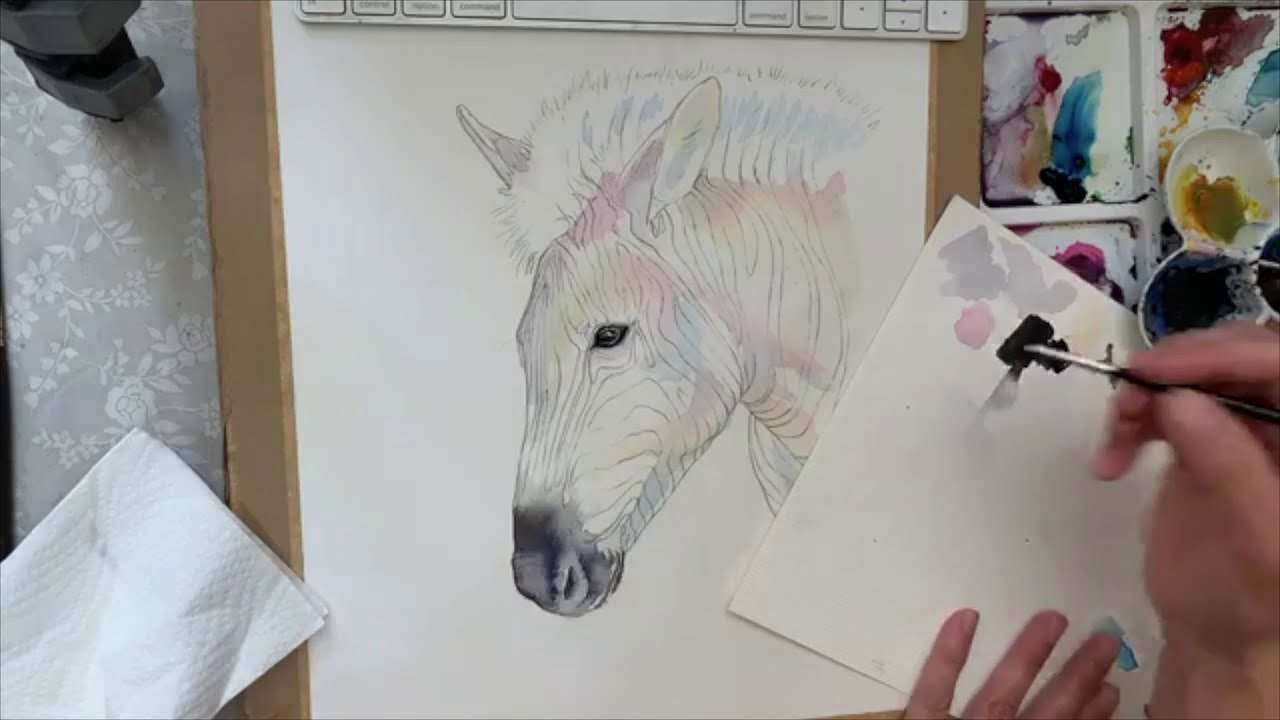 Zebra Watercolour Live
