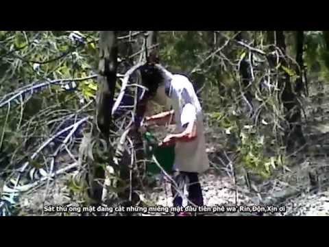 Cưa cây lấy tổ ong mật (chế phụ đề vui)