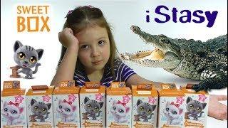 Розпакування Світ Боксів з Кошенятами. Крокодил в гостях у Насті. Sweet Box Пухнастики. Сюрпризи Кошенята