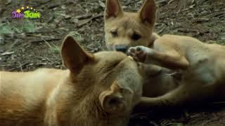 Животные мои друзья 2 сезон 19 эп. (познавательные передачи для детей с анимацией) на русском