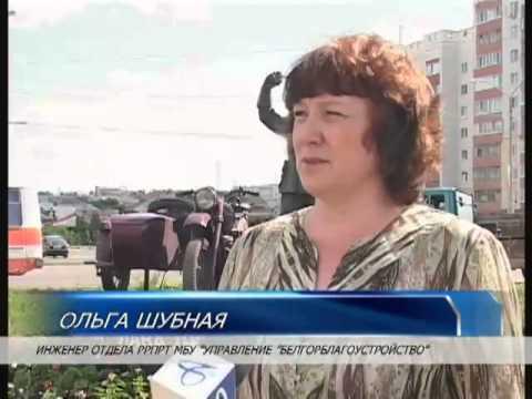 Тюльпаны на клумбах Белгорода заменяют на другие растения