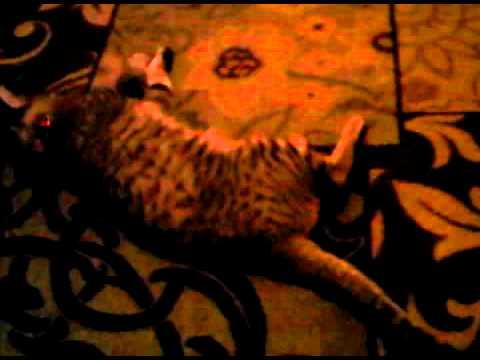 Cat on Catnip Part 1