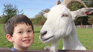 Learn Farm Animals in British farm