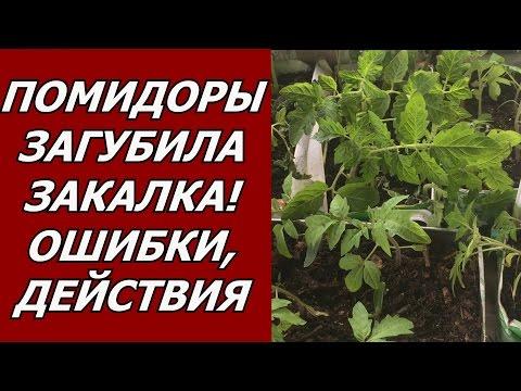 Вопрос: Как укрепить стебель рассады помидор У кого есть опыт?