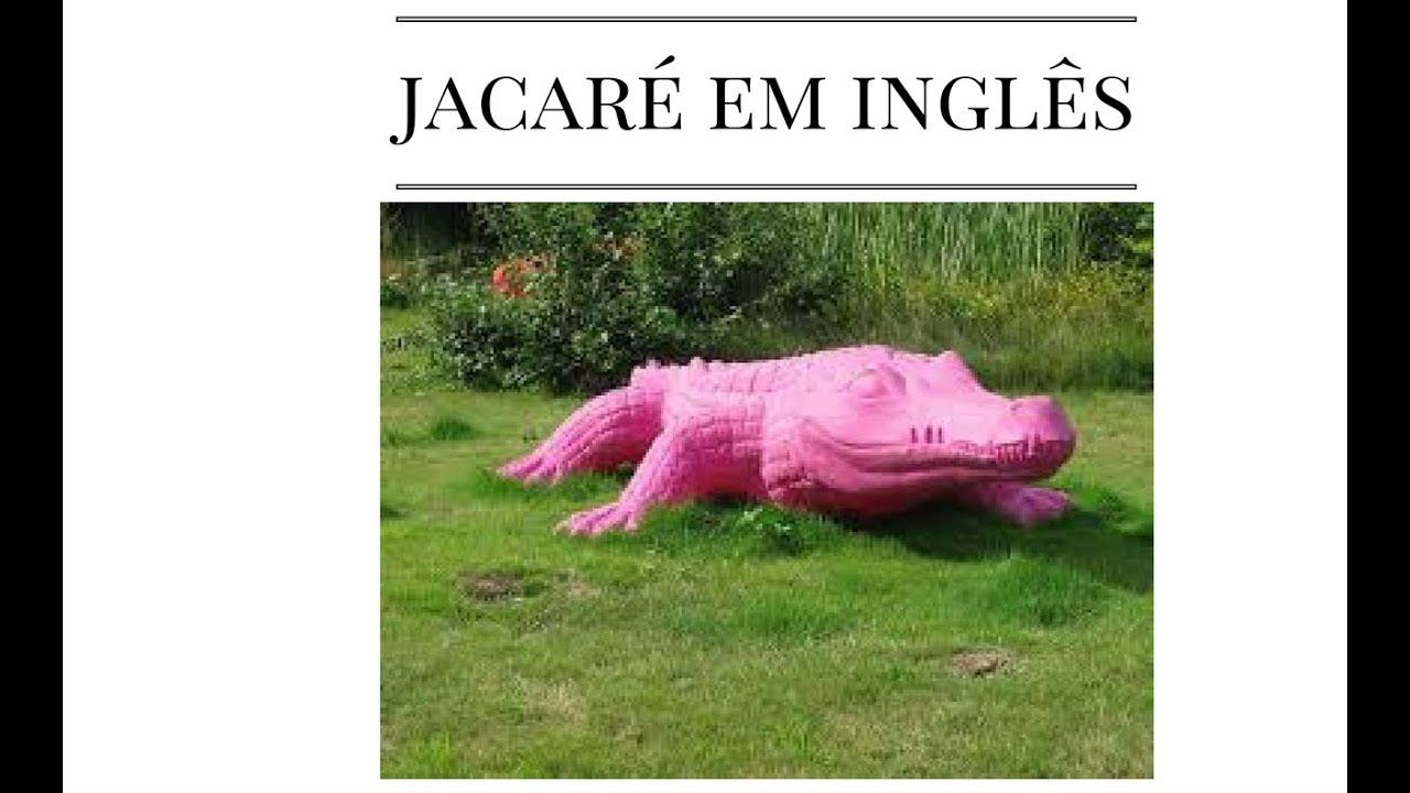 Como Se Fala Jacaré Em Inglês?