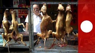 Caméra cachée : Festival annuel de viande de chien en Chine