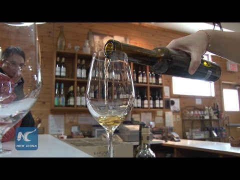 Canadian icewine, rare gift from nature