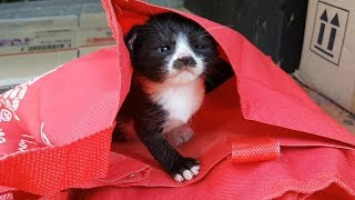 태어난지 얼마안된 아기고양이를 발견했습니다