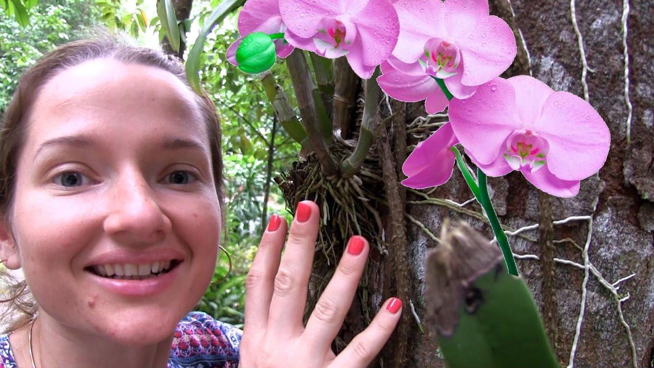 ОРХИДЕЯ, как растет орхидея, Таиланд. Цветущая орхидея ...