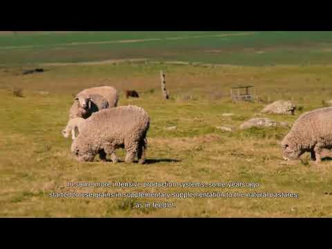 Livestock production fields at Uruguay