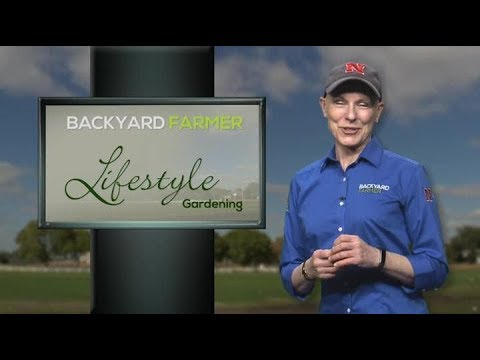 Lifestyle Gardening:  Cole Crops