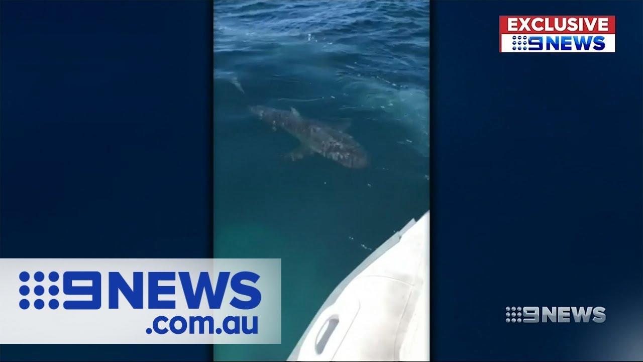 WA beaches closed after sharks circle inflatable boat   Nine News Australia