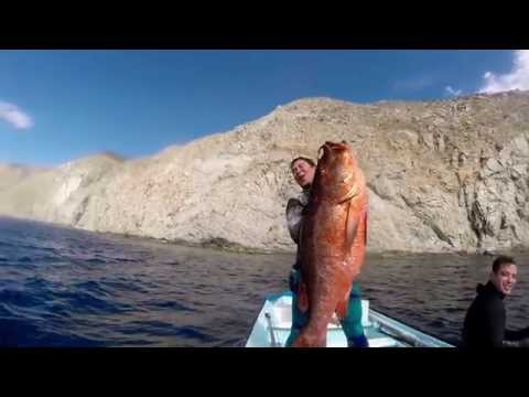 2014 Mix - Spearfishing cubera snapper / southern bluefin tuna / dogtooth tuna