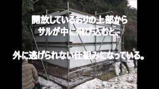 有害駆除、サルを効果的に捕獲 和歌山県田辺市龍神村柳瀬をこのほど、す...