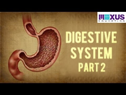 Digestive System - Part 2
